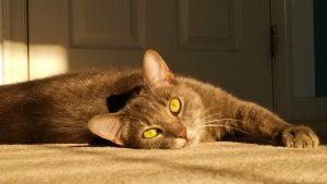 Orange cat lying in the sun