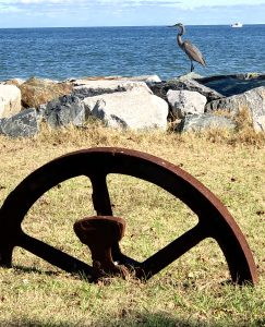 A heron standing on rocks with water in the background and a wagon wheel embedded in the ground in the foreground