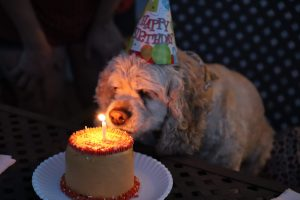 A dog in a birthday hat sniffing a small birthday cake with a candle