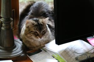 A cat sitting in front on a desk