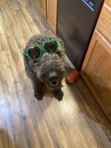 Small black dog wearing green sunglasses